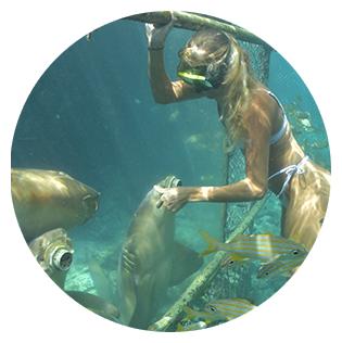 Girl snorkeling in the Curaçao sea feeding sea lions through feeding windows.