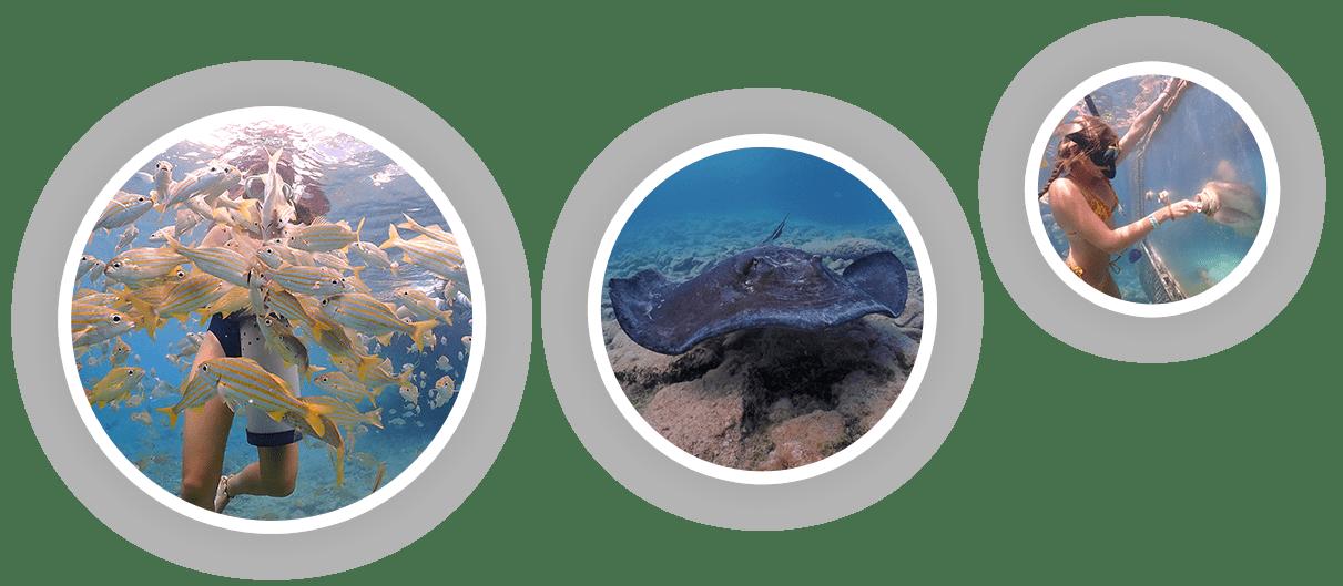 Meisjes beleven de ontmoeting met dieren onder water in het zeeaquarium van Curaçao tijdens het snorkelen.
