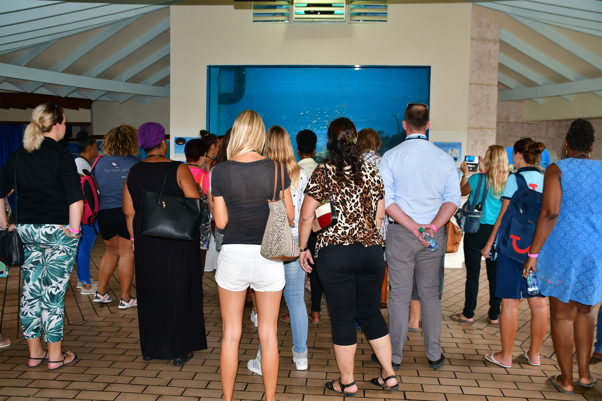A group of tourists looking at an aquarium experiencing the underwater world at sea aquarium Curaçao.