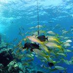 Meerdere vissen in de onderwaterwereld van Curaçao gevangen met de camera.