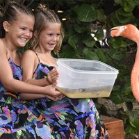 2 happy girls smile and hold a feeding bowl for the flamingo.