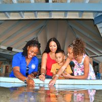A family having fun getting taught about the aquatic life with a sea aquarium host.