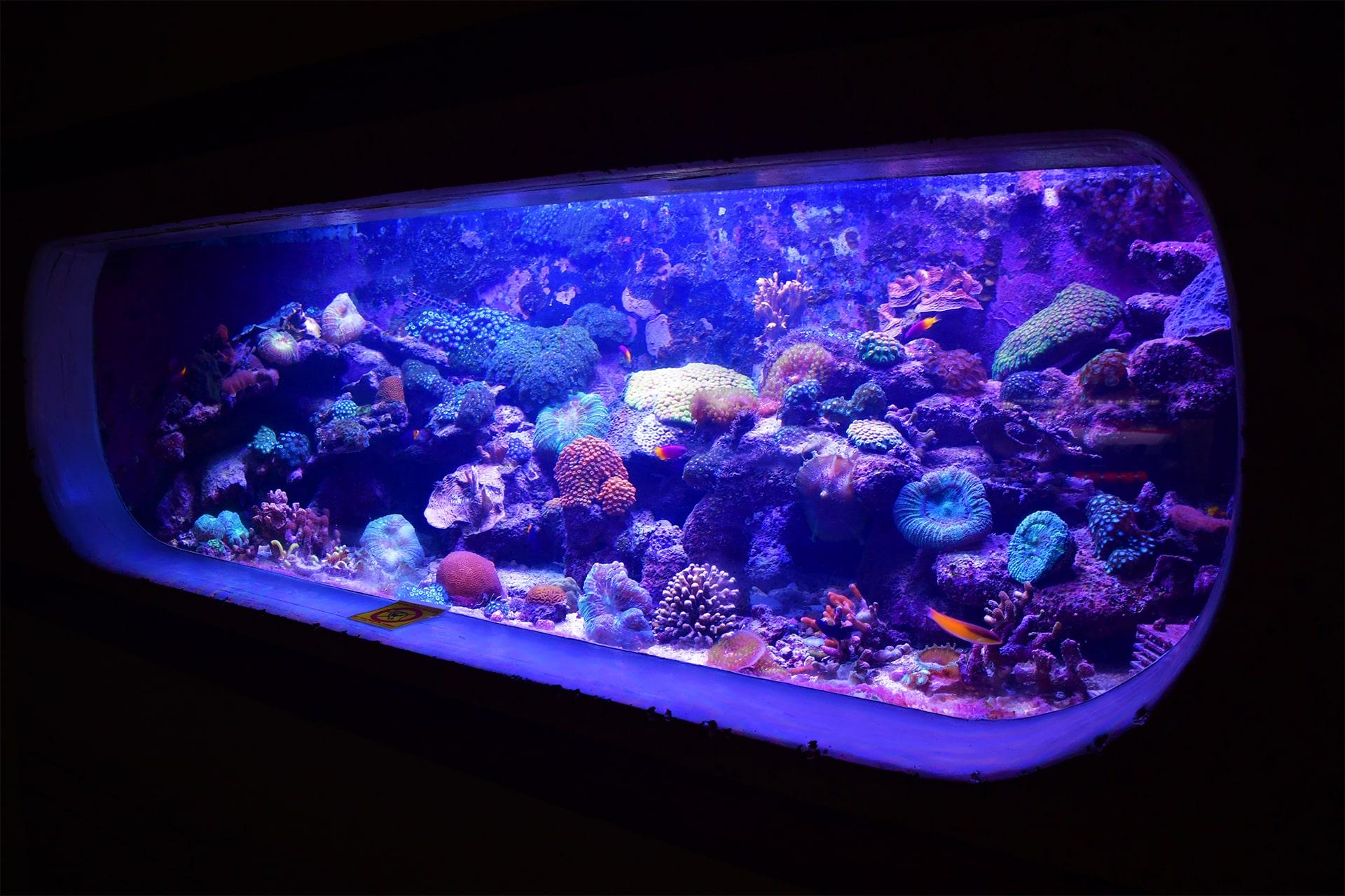 Curaçao Sea Aquarium recreëert de ecosystemen van de diepzee riffen van het eiland tot op duizend voet.